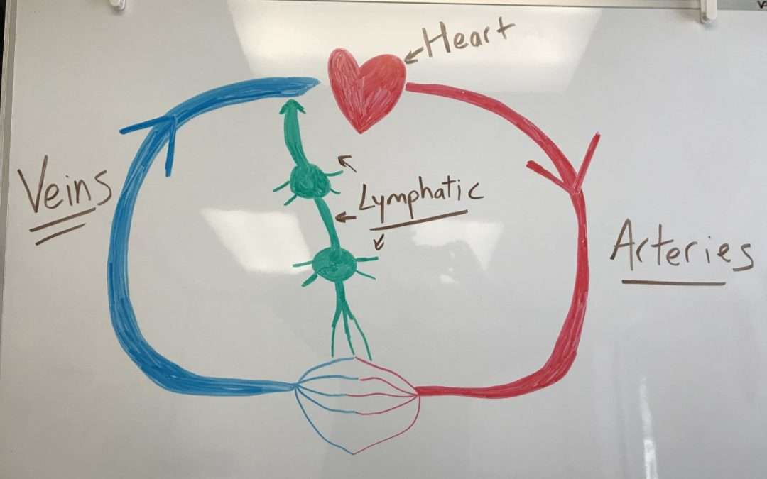 """What is """"Lymphedema""""? (Intro to Lymphatic System)"""
